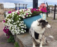 Maverick visits the local port town of Watchet